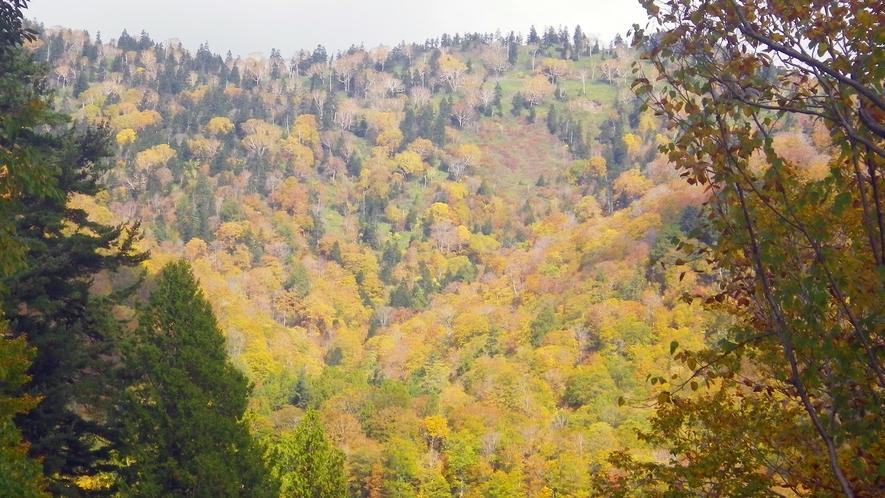 *尾瀬奥利根林道からのぞむ紅葉/山の紅葉は例年9月下旬~10月中旬が見頃です。