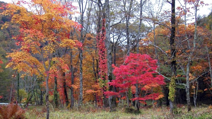 *尾瀬(紅葉)/土の匂い、穏やかな風、鮮やかな紅葉と五感で感じる紅葉の旅を