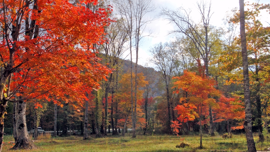 *尾瀬(紅葉)/澄み渡った空に鮮やかな紅葉が映えます。