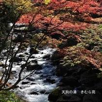 照葉峡(6)