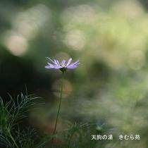 苑庭(7)