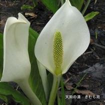 尾瀬(7)