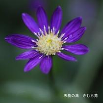 苑庭(4)