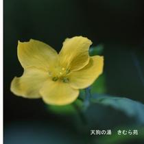苑庭(8)