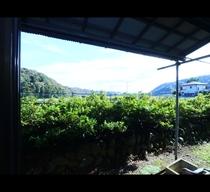 明るい和室から見える緑と広い空が気持ちいい!*