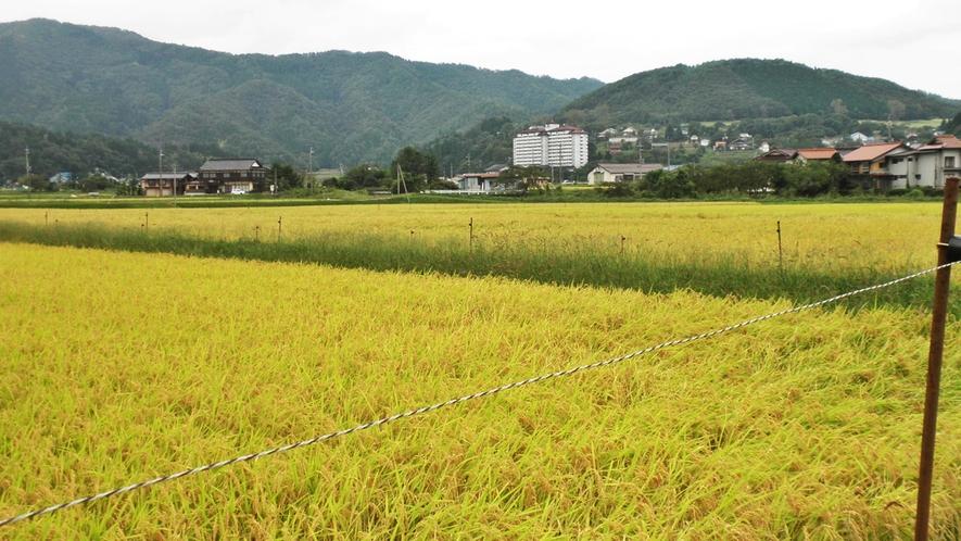 *【施設周辺】目の前で自家製のお米も育てています!