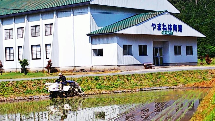 *【施設周辺】やまね屋専用体育館は当館より徒歩5分♪目の前で自家製のお米も育てています!