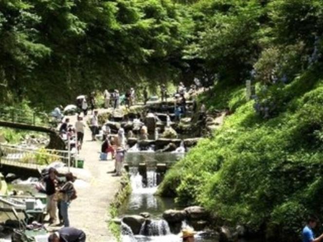 千早川 マス釣り場