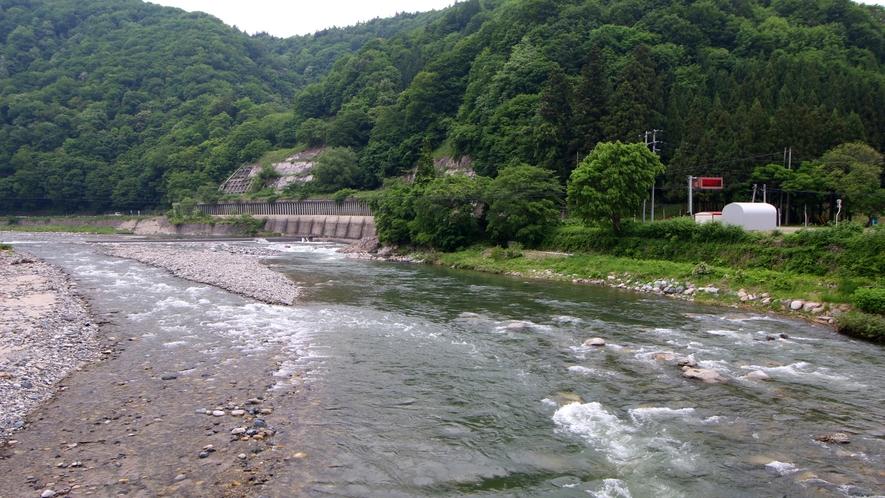 伊南川で鮎釣り三昧