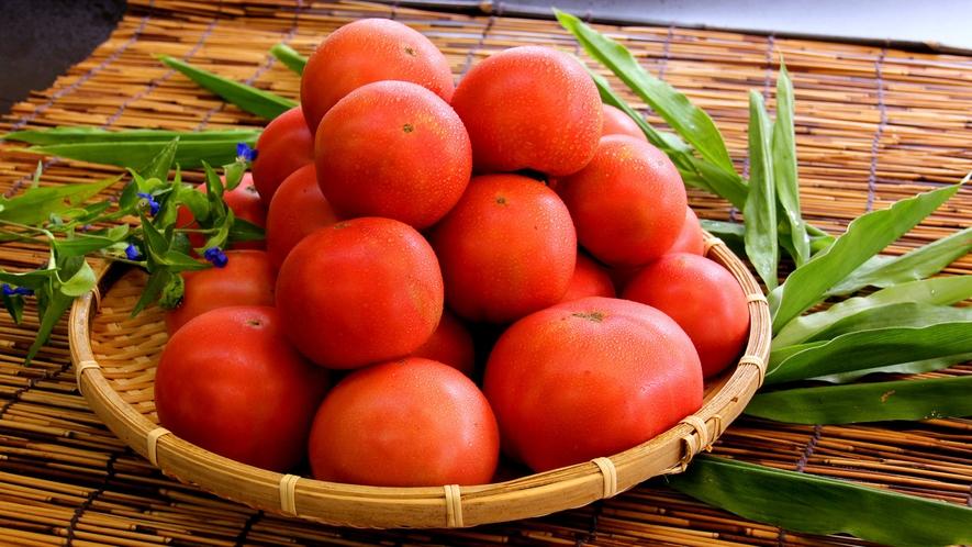 【季節の食材】南郷トマト。糖度が高く、身が引き締まったしっかりとした食感が特徴のブランド野菜!