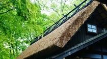 春夏茅葺屋根