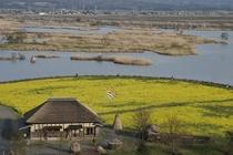 菜の花の福島潟