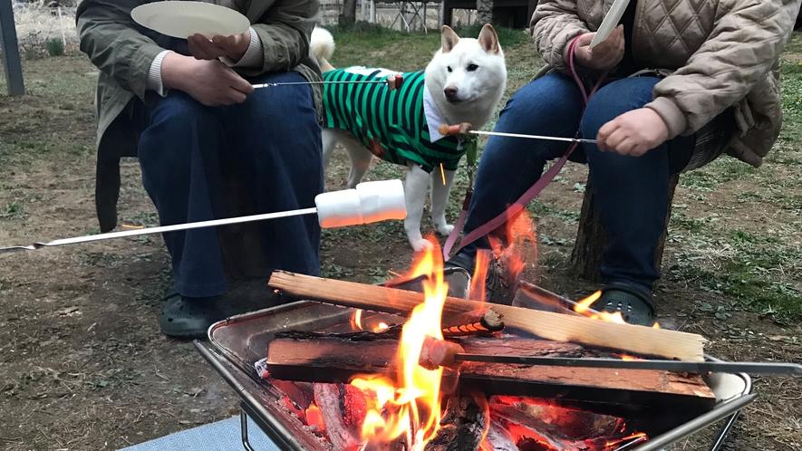 僕も一緒に焚き火したワン!