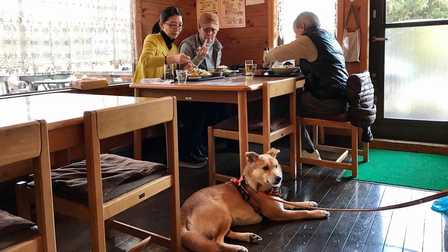 店内でペットとお食事できます