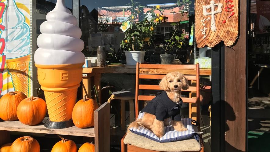 【睦】のアンバサダー犬、海くん