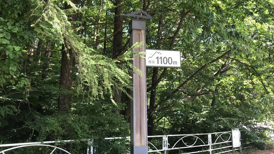 標高1100メートル