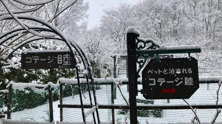 雪遊びできますよ~