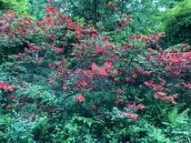 コテージ周辺の花⑬
