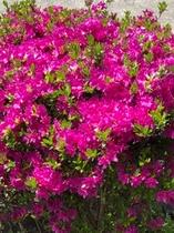 コテージ周辺の花⑧