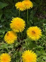 コテージ周辺の花⑥