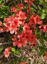 コテージ周辺の花②