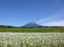 大山とソバの花