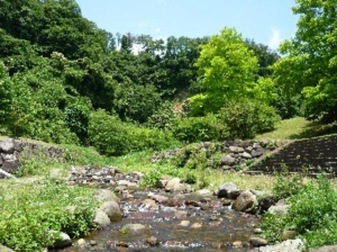 初夏の渓流植物園
