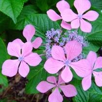 ★館内純和風の日本庭園では可憐なお花がひっそりと咲いています