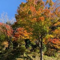 当館周辺の紅葉風景