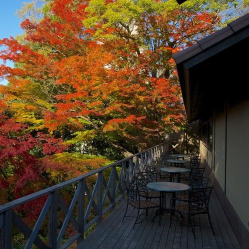【バルコニー】自然豊かな環境で四季の移ろいを感じられます。紅葉も見応えがあります。