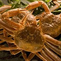 【松葉ガニ】濃厚で上品な甘みがあり、カニの美味しさを存分に味わうことができる高級ブランドカニです。