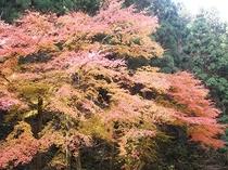 秋・紅葉1