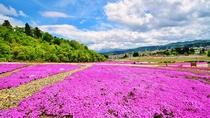 **残雪の越後三山と鮮やかなピンク色の芝桜のコントラストが綺麗♪芝桜は5月中旬が見頃です!