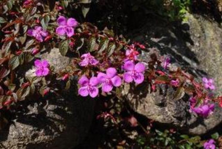 年中花を付けてくれる赤紫の花