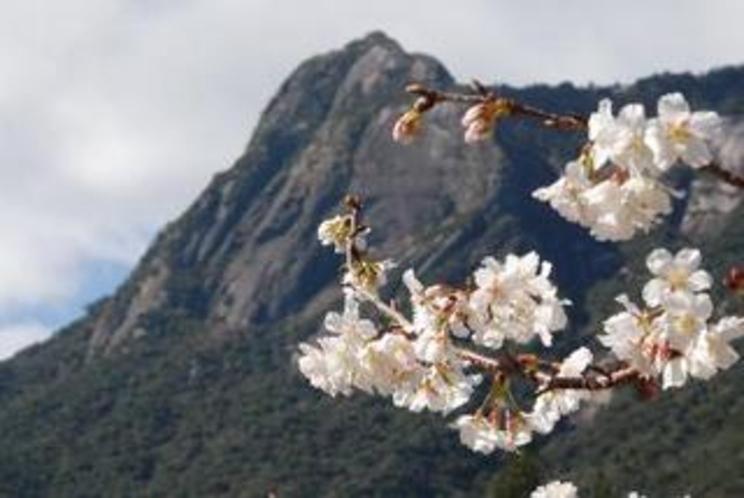 モッチョム岳と桜