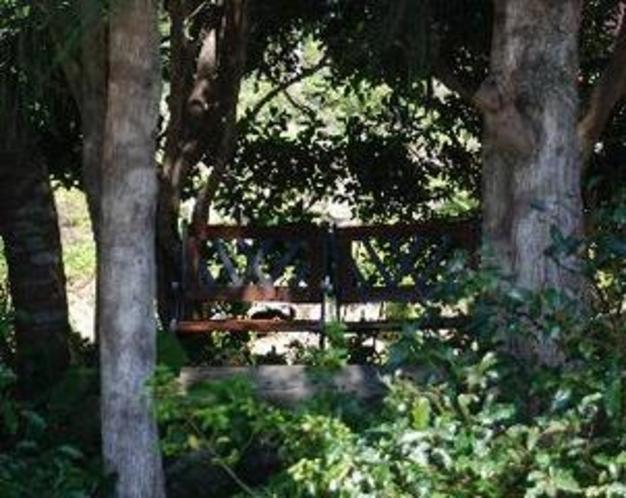 シンボルツリーの木立の中のベンチ