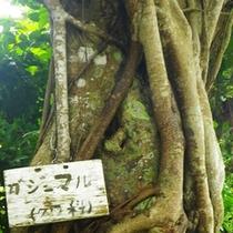 *竹富島の雰囲気