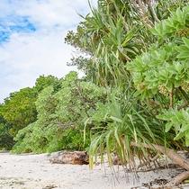 *カイジ浜:当館から約2kmのところにあります。浜辺は星砂です。