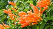 *南国の植物