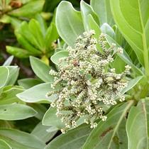 *島に自生する南国の植物