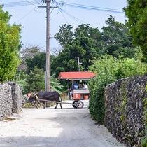 *昔ながらの街並みを、ガイド付きでゆっくり巡る、人気の島観光です。