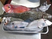 竹岡の魚達2
