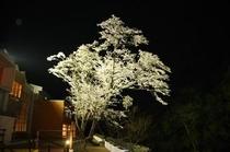 【ライトアップ】夜桜