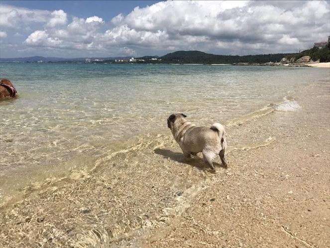 ペットと泳げるビーチ♪車で10分!