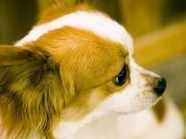 全プランとも大浴室を除く館内全ての場所で小型犬同伴歓迎