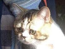 【猫】ムサシちゃん