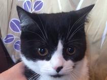 【猫】ソーセキちゃん