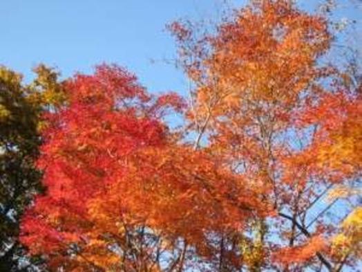 【秋満喫】秋得ステイ 朝食付
