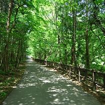 *赤谷湖周辺・自然遊歩道