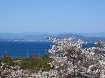 桜ごしに見える高知市方面
